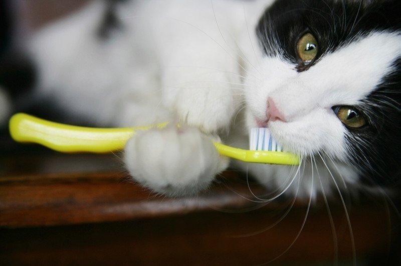 고양이 양치질, 고양이 치아관리법의 모든 것