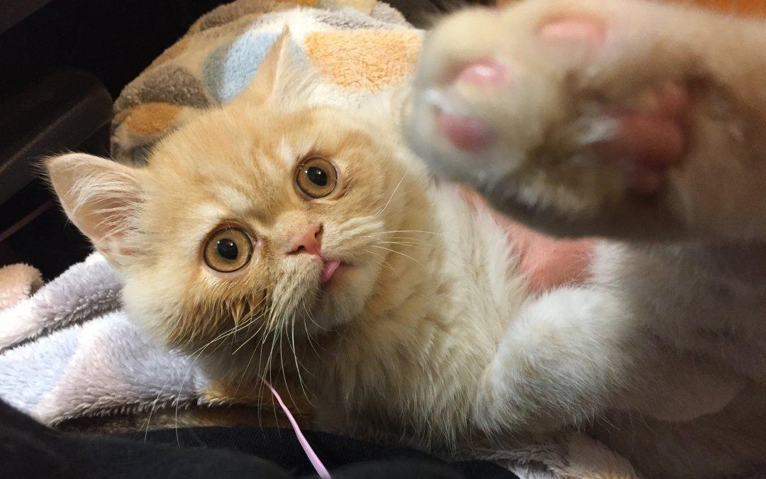 고양이 살찌우기 대작전 01
