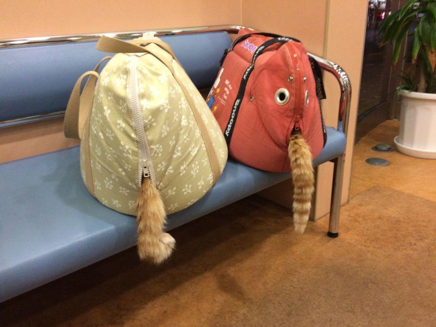 [유머] 동물병원 대기실에서 본 풍경