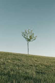 lonely_tree