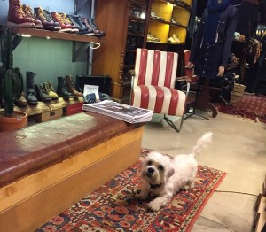 The shop dog, keen to entertain.