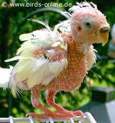 PBFD www.birds-online.de