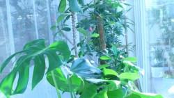 Sicherheit im Freiflugzimmer giftige Pflanzen