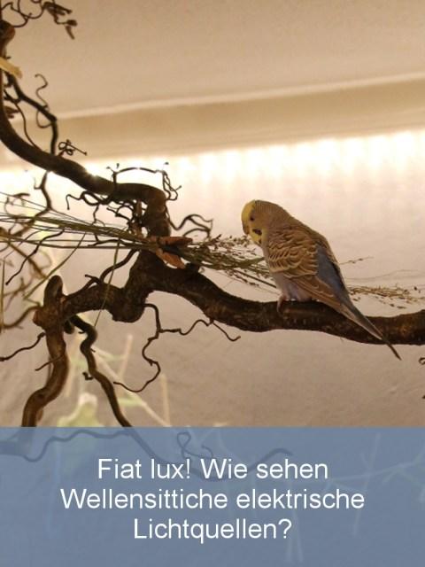 wellensittiche-blog-beleuchtung-im-freiflugzimmer-teaser Fiat lux - Wie sehen Wellensittiche elektrische Lichtquellen?