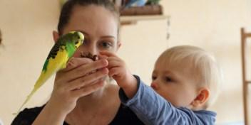 Wellensittiche Blog Kinder Haustiere Eltern Slider