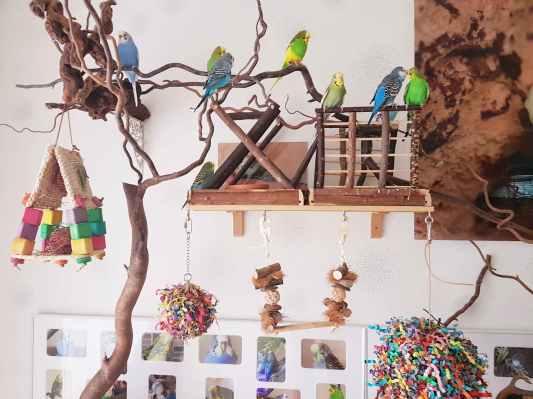 Wellensittiche Blog Vogelzimmer Spielzeug Federtraumwelt