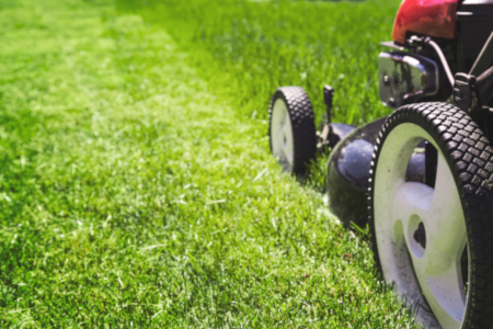 6 turf care tips - healthy
