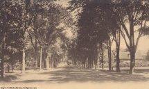 Dutch Elm Disease And Loss Of Wellesley Trees