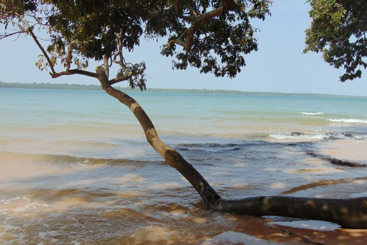 Image of a tree in Guinea-Bissau that's being affected by rising sea levels as we look at water in a time of global warming