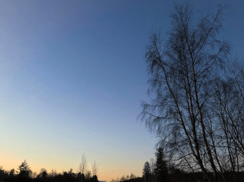 Tree Sunrise
