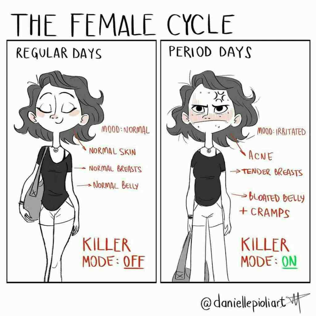 the-female-cycle
