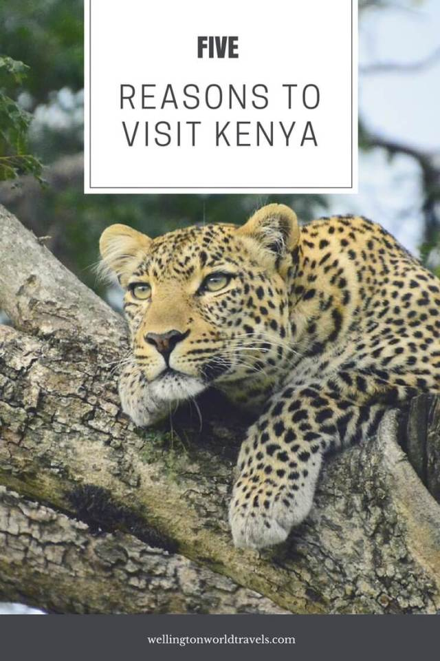 Reasons to visit Kenya - Wellington World Travels | travel guide | travel destination | travel bucket list ideas