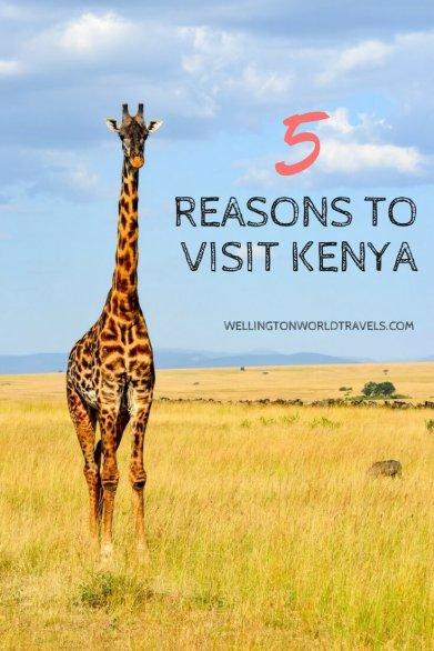 Reasons to Visit Kenya - Wellington World Travels | travel guide | travel destination | travel bucket list ideas