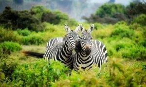 5 Reasons to Visit Kenya
