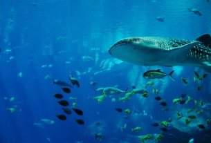 13 Best Scuba Diving Places in Asia - Wellington World Travels