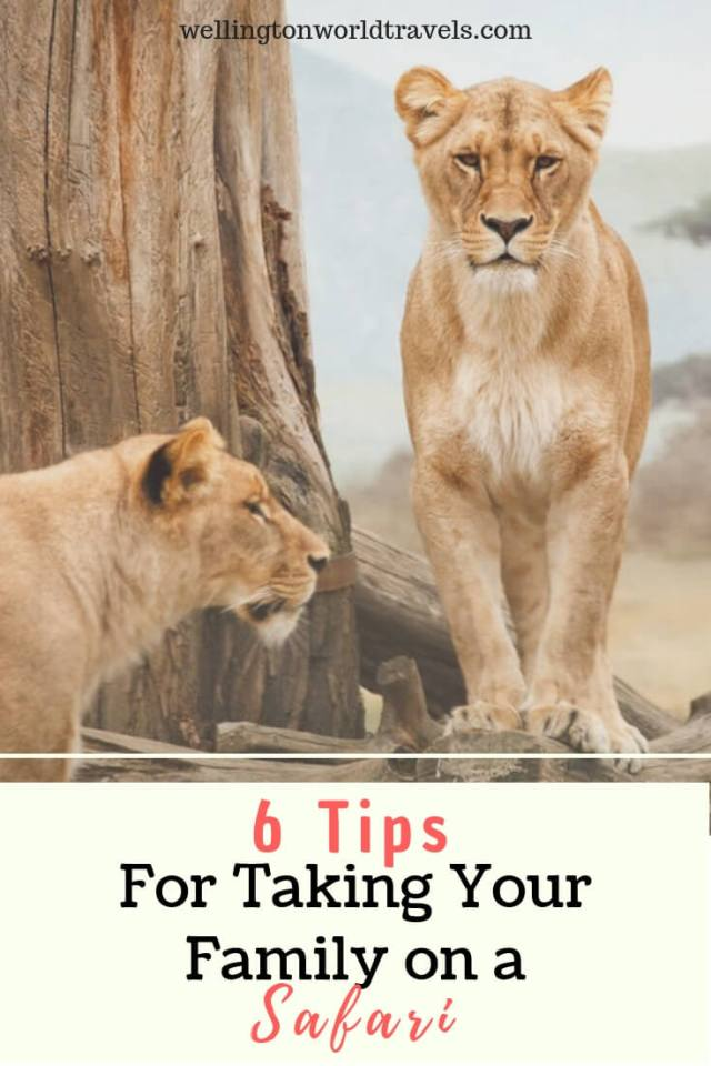 6 Tips for Taking Your Family on a Safari - Wellington World Travels | Family travel destination | family travel tips for going on a safari #safaritips #safariwithkids #safariwithfamily #Africansafari