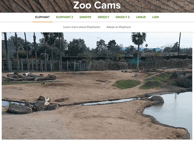 Reid Park Zoo cam