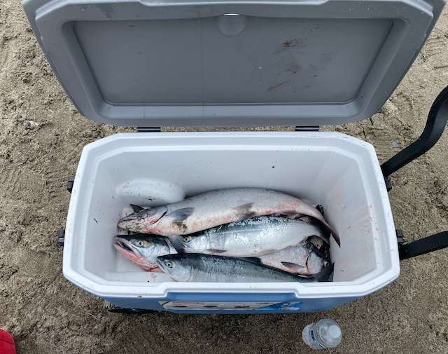 salmon iin cooler