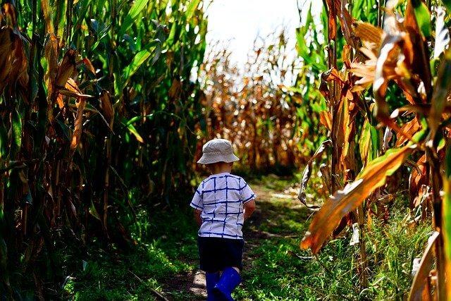 cornfield boy