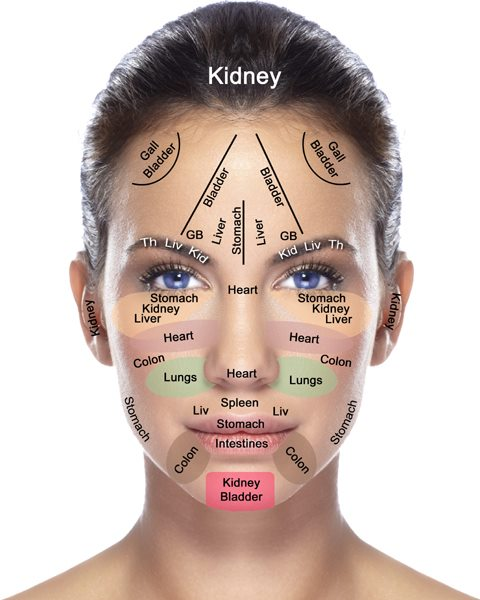diagram of artificial eye marine batteries does your face reflect the health body organs? | wellness mcuniverse