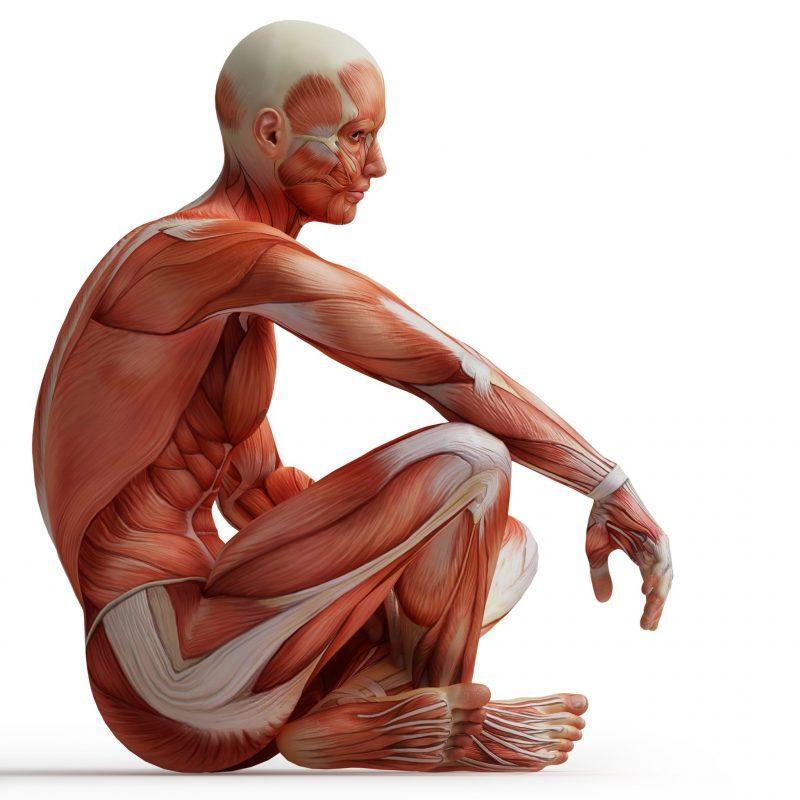 corso di anatomia per massaggiatore