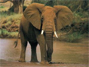 Elephant-elephants-28788754-1024-768