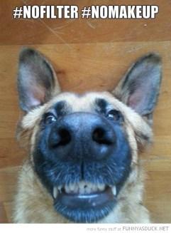 funny-pictures-selfie-dog-no-filter-makeup