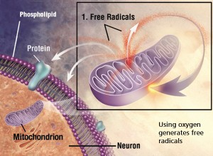 Free Radicals and Oxidative Stress