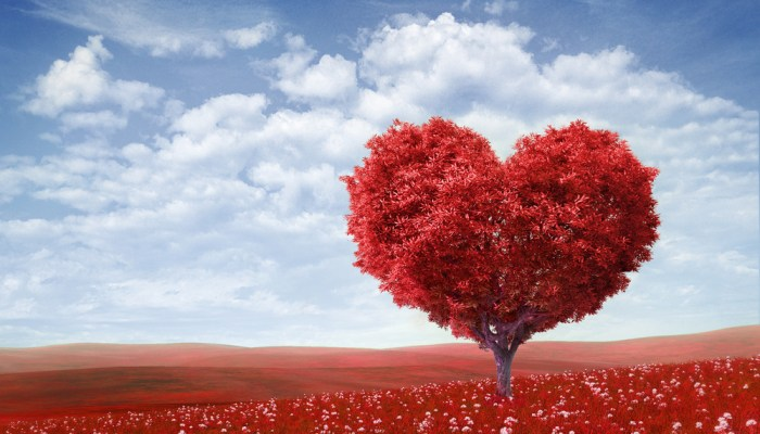 9 Valentine's Day Reasons to Love Your Heart!