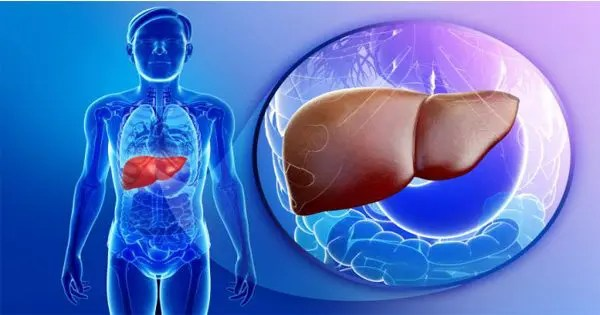 blog illustration of see through body into the liver
