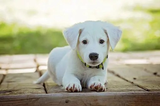 blog picture of puppy laying down