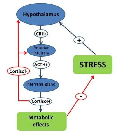 El eje hipotalámico-hipofisario-interrenal-del-pescado-hormona liberadora de corticotropina-CRH