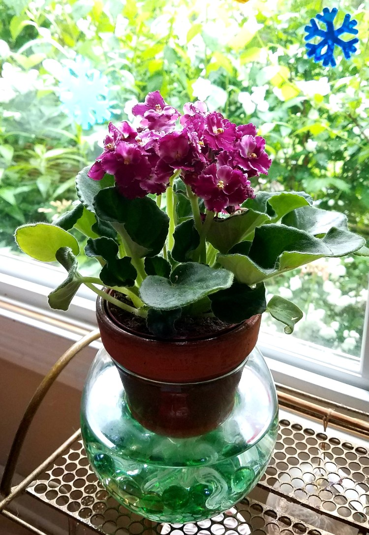 African violet container