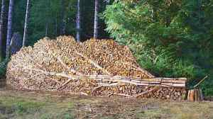 tree woodpile