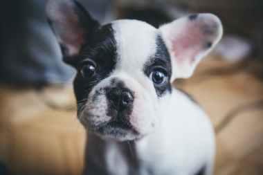 tinybwpuppy