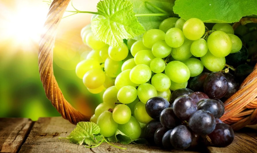 Health Benefits of Eating Grapes & It's Essential Nutrients