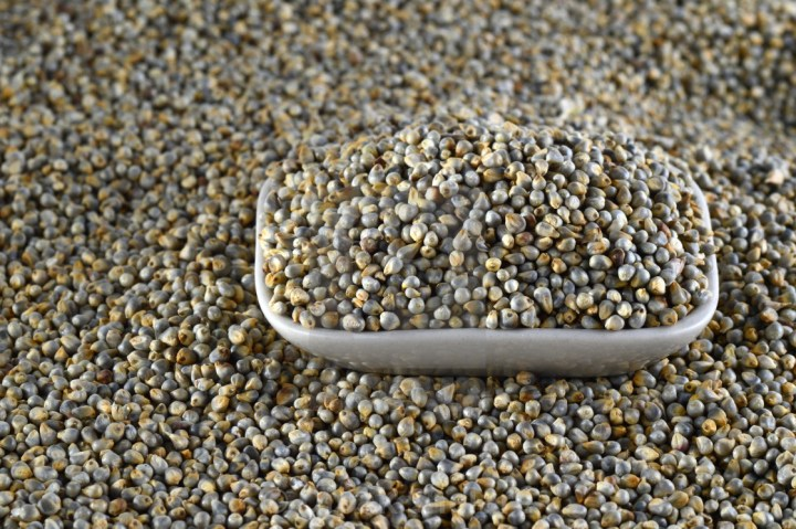 Bajra/Pearl Millet