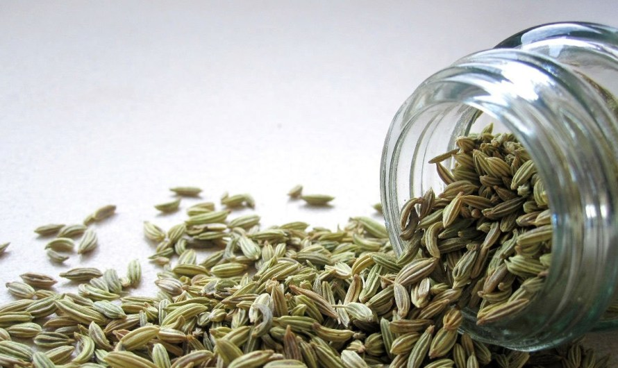 Fennel Seeds Health Benefits, Weight Loss