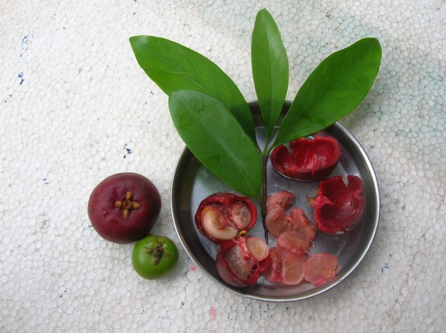Kokum Benefits ( Garcinia indica )