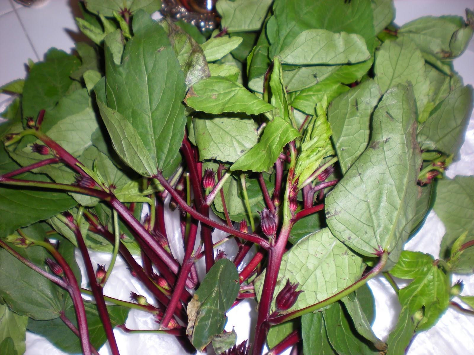 Gongura Leaves