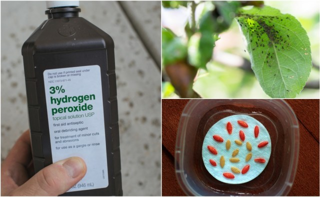 Uses for Hydrogen Peroxide in the Home Garden