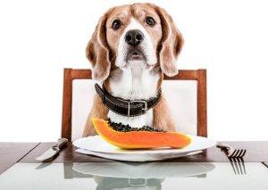 Papaya for Dogs