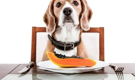 Papaya for Dogs