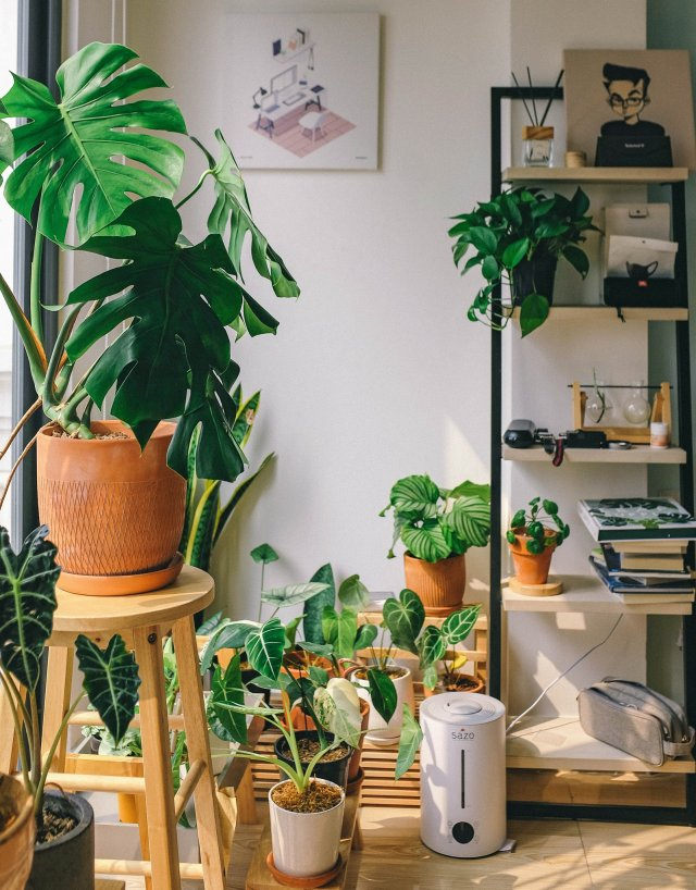 Urban Jungle are best way to crreate to Healthy Home.