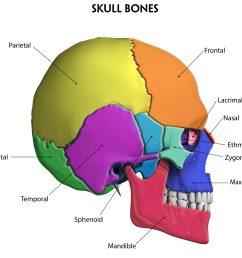 skull skeleton diagram [ 2987 x 2721 Pixel ]