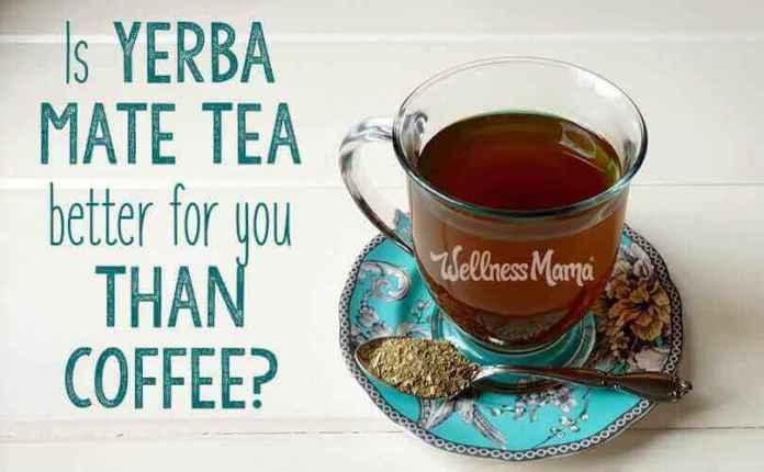 Is Yerba Mate Tea Better for You Than Coffee