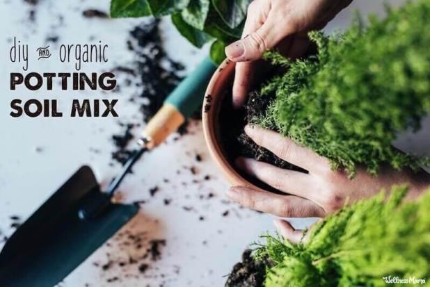 best soil for indoor plants