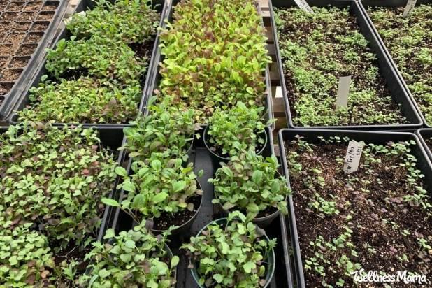 growing your own seedlings