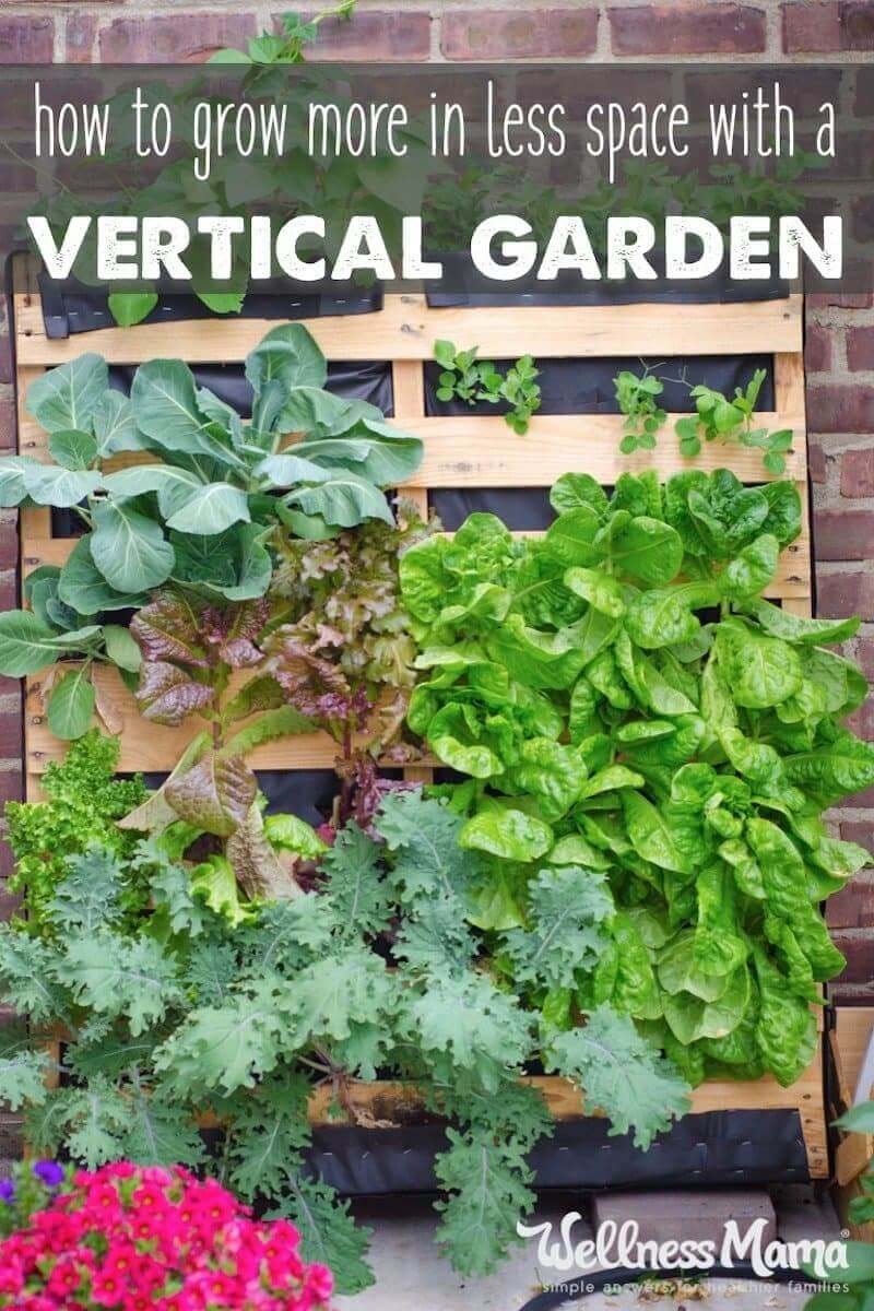 A vertical garden lets you grow more in a smaller space by using planters, wall gardens, tower gardens or hydroponics for plants like cucumbers, beans, etc.