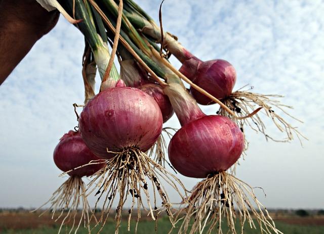 health benefits of onion 2